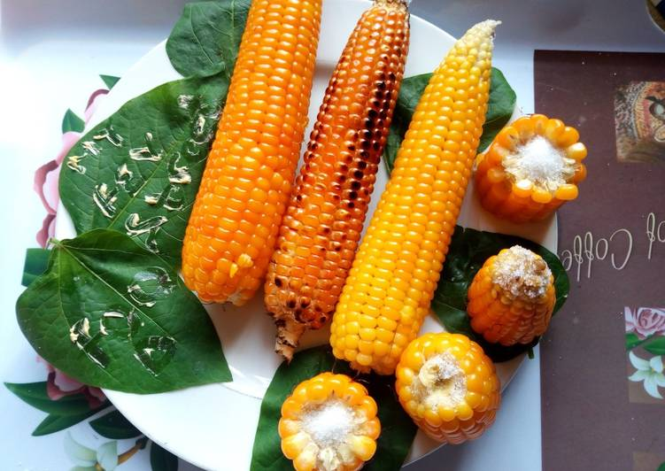 Cooked Corn (Maize)